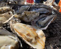 牡蠣食べ放題+フリードリンクプラン