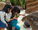 [Saturdays, Sundays, and holidays lunch] Kobe Animal Kingdom Admission & GOCOCU Lunch [Aged 4~6]