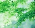 【ゆっくり3時間+限定デザート付き】トップラウンジでの絶景ロケーション 新緑AfternoonTea